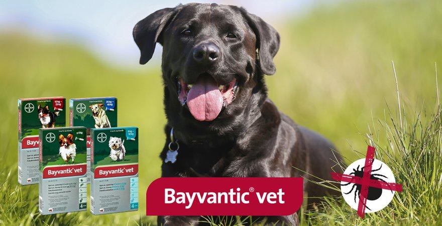 Bayvantic koiran punkkikarkoite