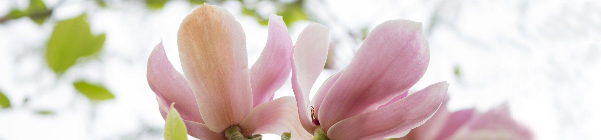 Lopen apteekki kevät