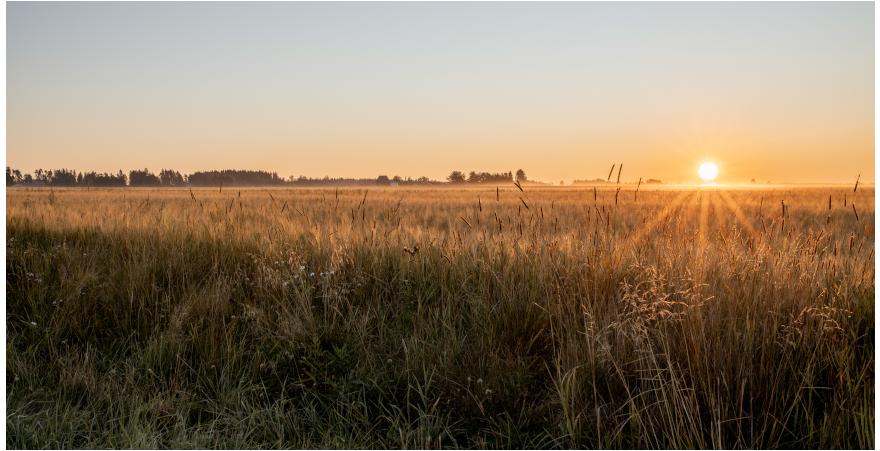 Aurinko nousee viljapellon ylle